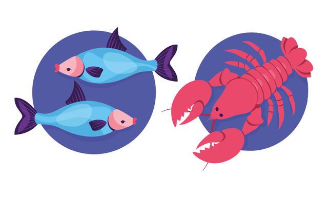Passt widder das und fisch ▷ Partnerhoroskop